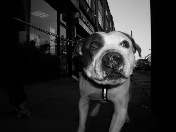 Dog, Feb (2017) Millers.